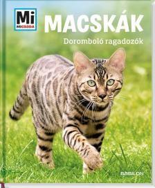 Macskák - Doromboló ragadozók